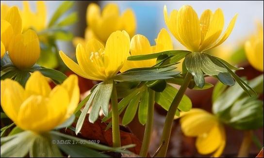 Geel lente 17022019